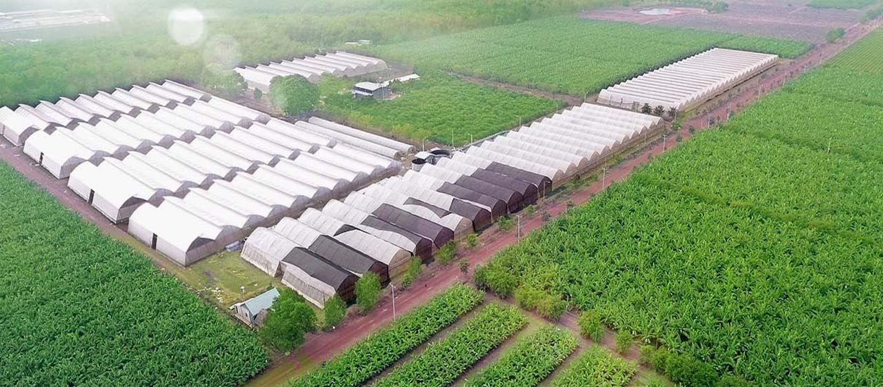 cung cấp vật tư lắp đặt nhà kính nông nghiệp