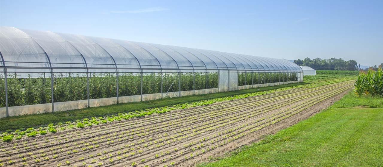 vật tư thi công nhà kính nông nghiệp