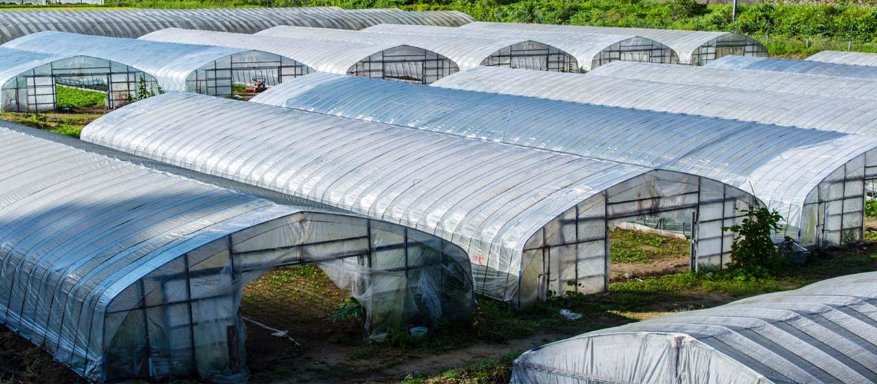 Vật tư nhà kính nông nghiệp công nghệ cao