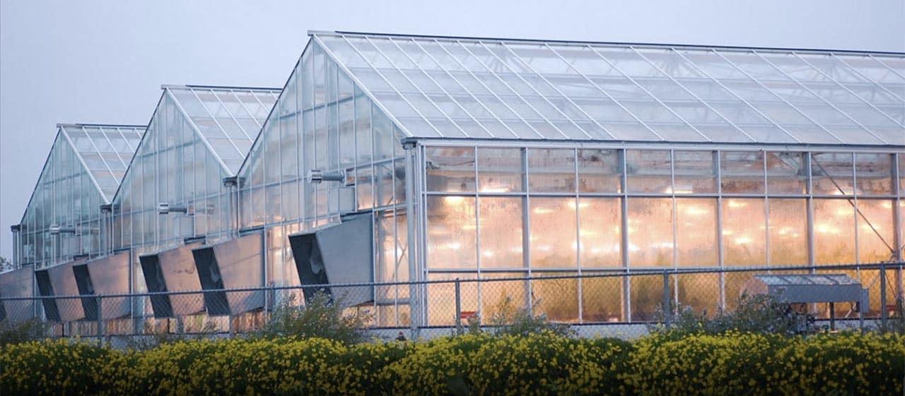 Tấm lợp lấy sáng làm nhà kính nông nghiệp công nghệ cao