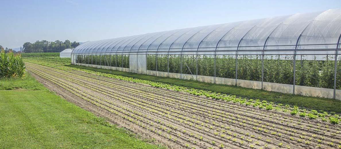 Làm nông trong nhà kính có an toàn không?