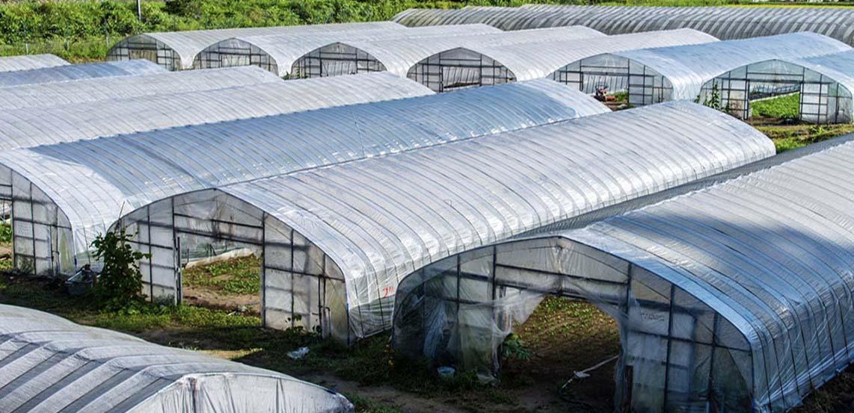 Thông tin mua màng nhà kính nông nghiệp