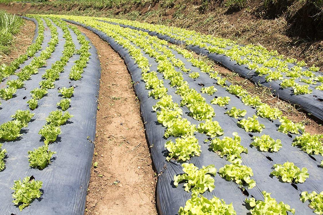 Sản xuất màng phủ nông nghiệp đục lỗ sẵn